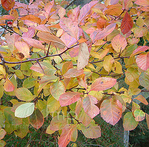 how to stop unwanted growth from around a deciduous tree