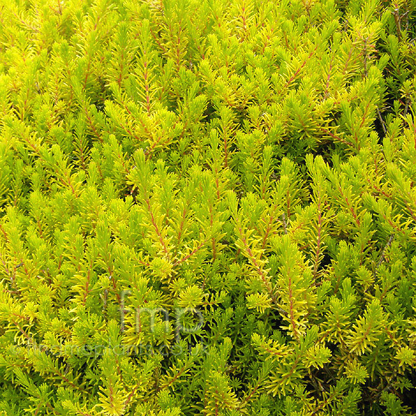 Big Photo of Erica Vagans